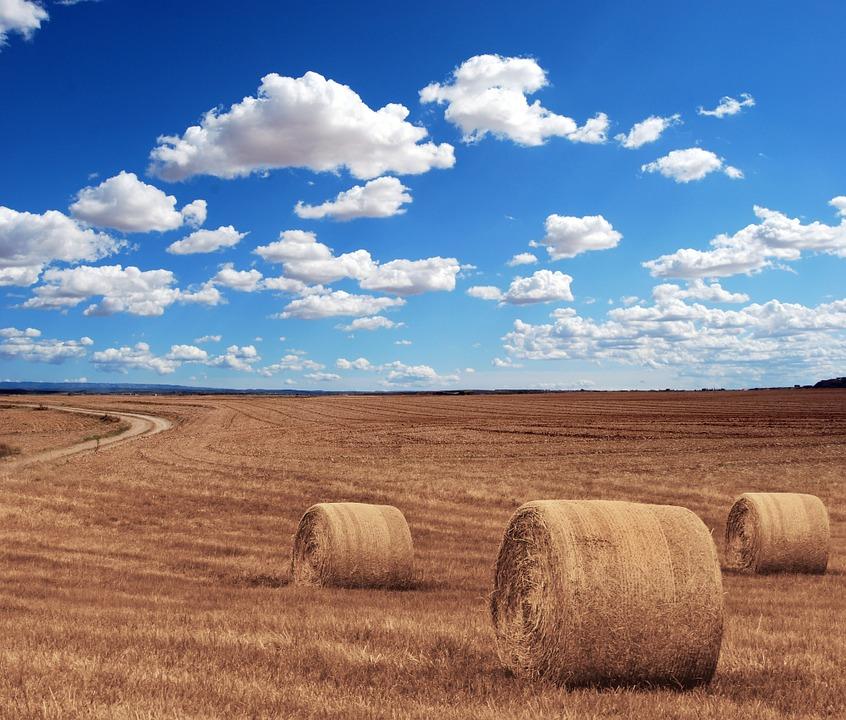 Ubezpieczenie dla rolników jest obowiązkowe. Źródło: Pixabay.com.