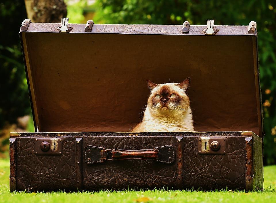 Zagubiony bagaż to jedna z możliwych szkód odniesionych w podróży. Źródło: Pixabay.com.