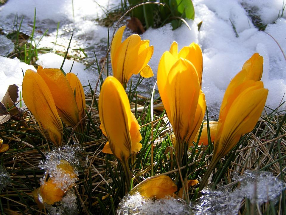 Śnieg na wiosnę może oznaczać duże straty dla niektórych rolników. Źródło: Pixabay.com.